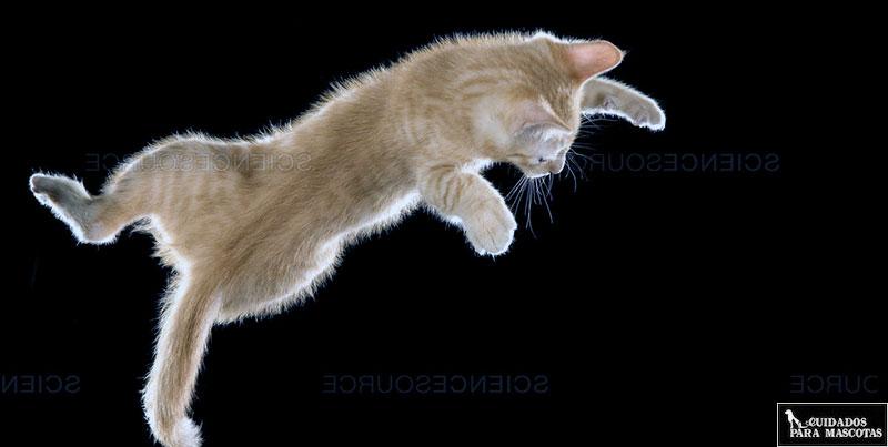 Gato cayendo al vacío