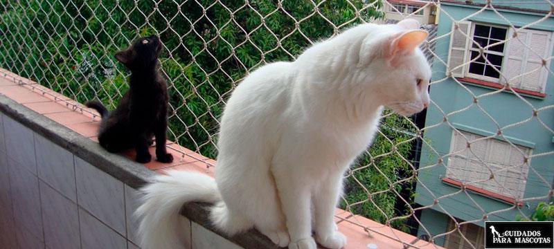 Gatos balcón