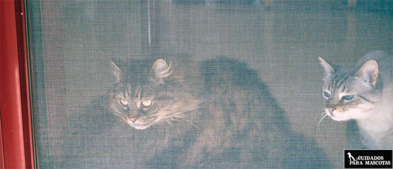 Mosquitera para evitar que tus gatos se caigan