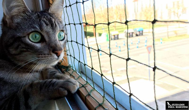 Protege las ventanas con una red