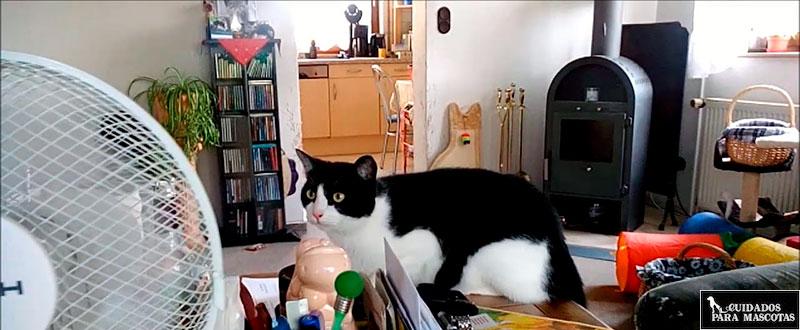 Refrigera a tu gato con un ventilador