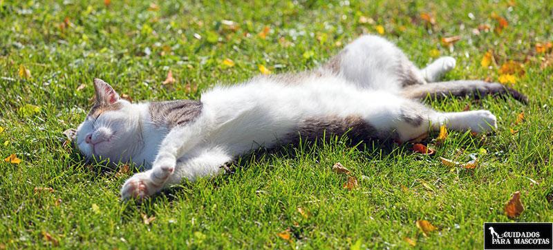 Trucos para reducir el calor que pasan tus gatos en verano