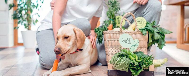 ¿Es bueno darle pienso vegano a tu perro?