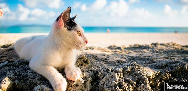 10 Trucos para que tu gato pase menos calor en verano
