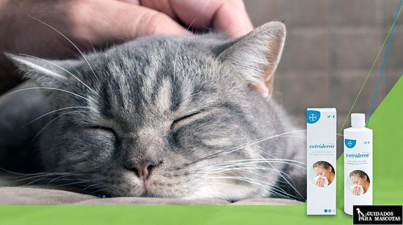 Vetriderm para acabar con la alergia al pelo de gato