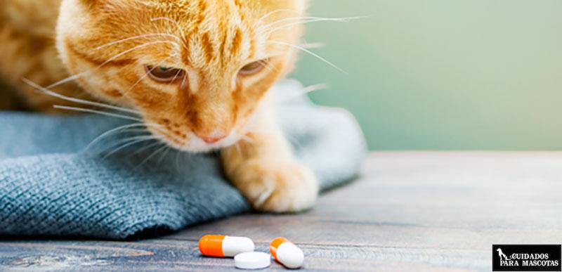 Calmurofel pastilla gato