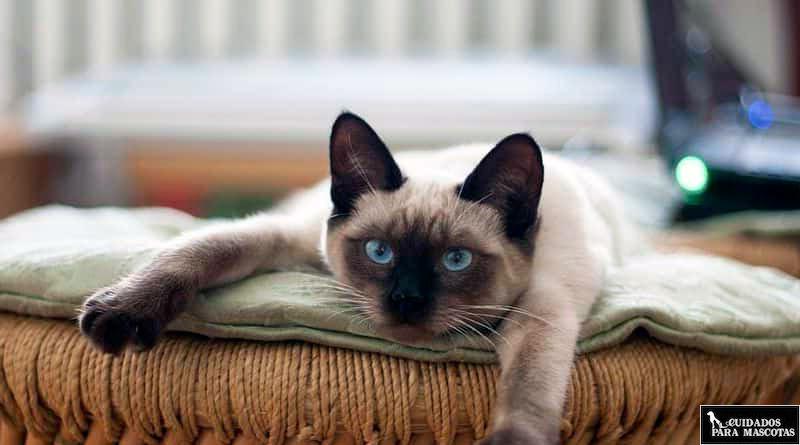 Tristeza a causa de las bolas de pelo en gatos