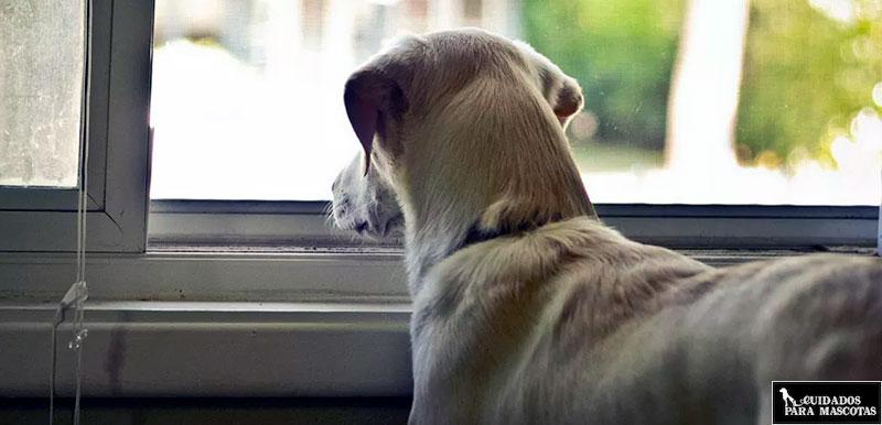 Cuida a tu perro durante el confinamiento
