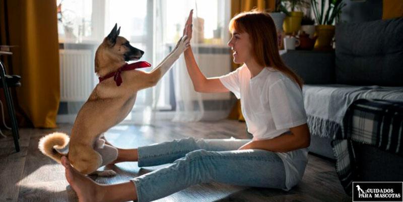 Juega más en casa con tu perro