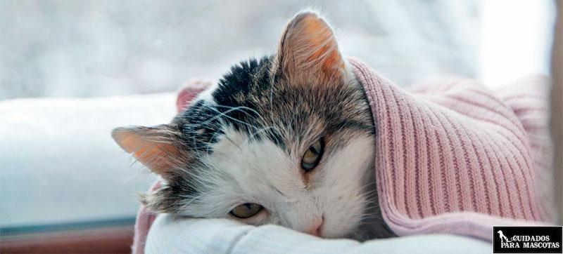 Las bolas de pelo en gatos causan falta de apetito
