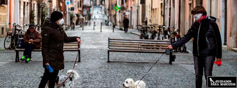 ¿Puedo pasear a mi perro durante el toque de queda?