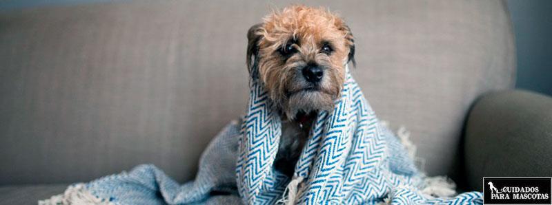 Tu perro podría tiritar si pasa frío