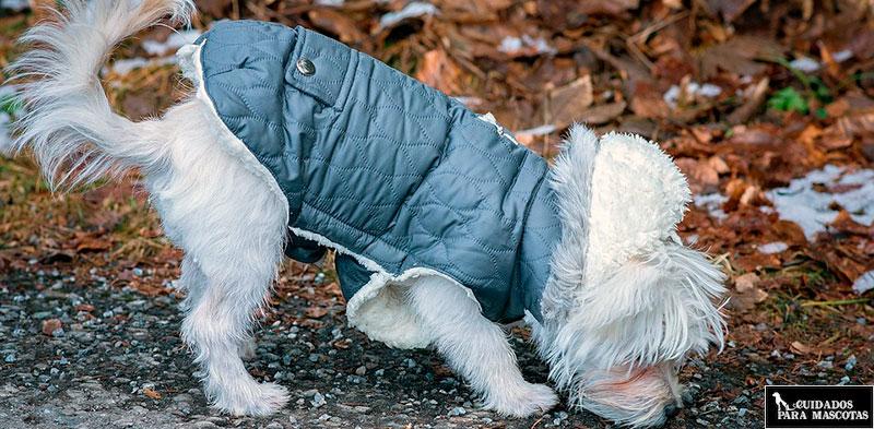 Como saber si tu perro pasa frío
