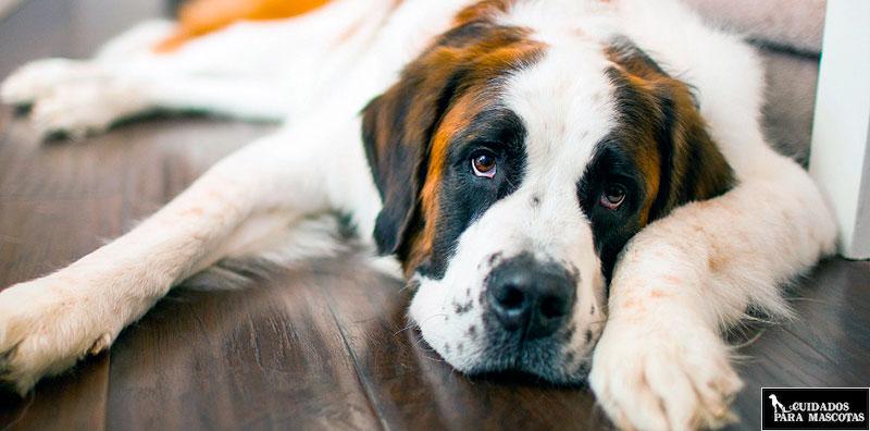 Tu perro puede estar triste si pasa frío en invierno
