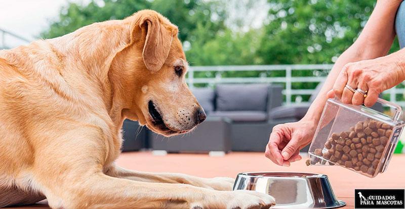 Pienso veterinario a medida