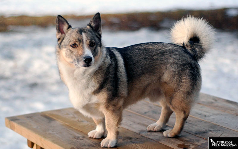 Cuidado al pasear con tu perro por el hielo o la nieve