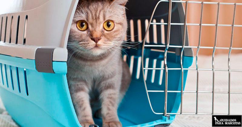 Conclusiones sobre los transportines cómodos para gatos