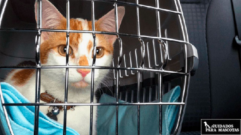 Encuentra el transportín más cómodo para tu gato