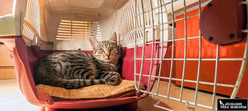 Transportines rígidos pero cómodos para tu gato