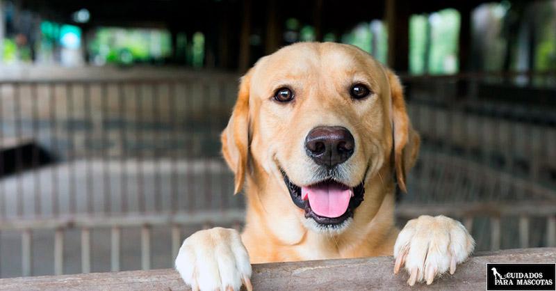 El mejor regalo para un perro puede ser adoptarlo