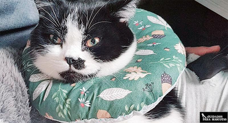 Collar isabelino para gatos