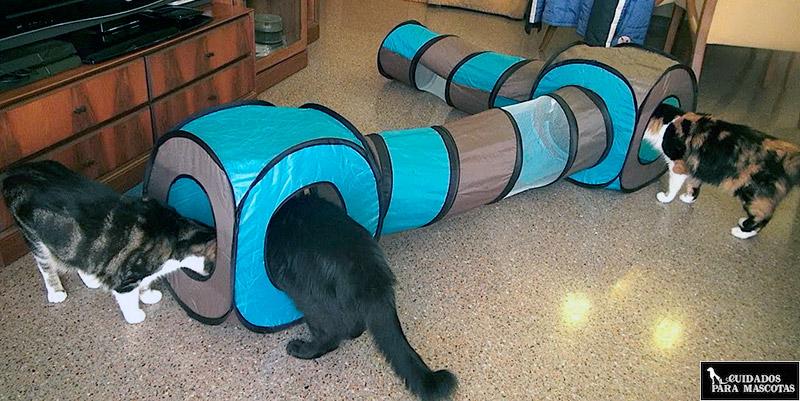 Juegos para gatos de interior