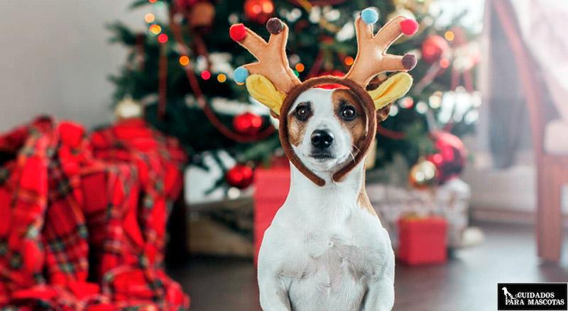 Los mejores regalos de Navidad para tu perro