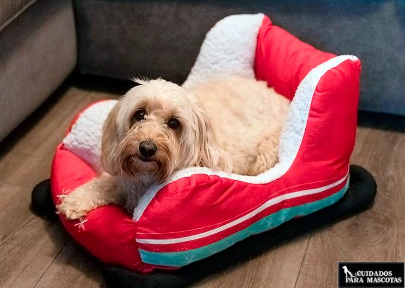 Camas de navidad para tu perro