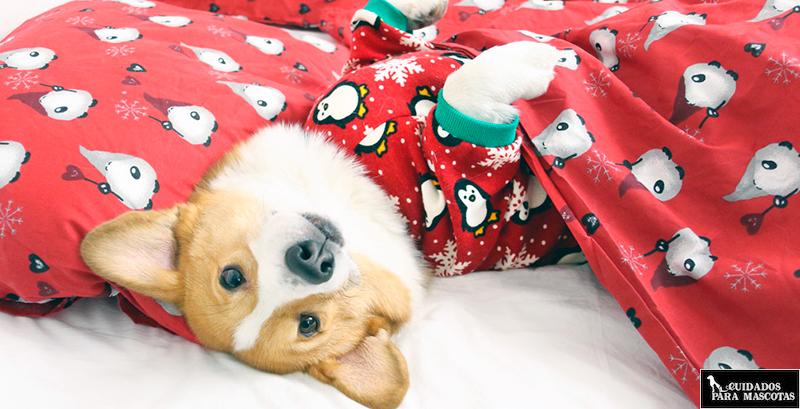Traje de navidad para tu perro