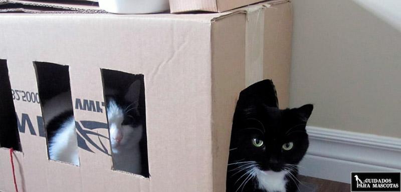 Túnel para gatos casero