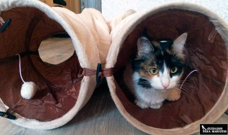 Túneles para gatos de tela