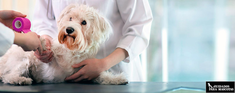 Acude al veterinario para solucionar las heridas de tu perro