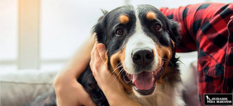Como curar una herida en tu perro