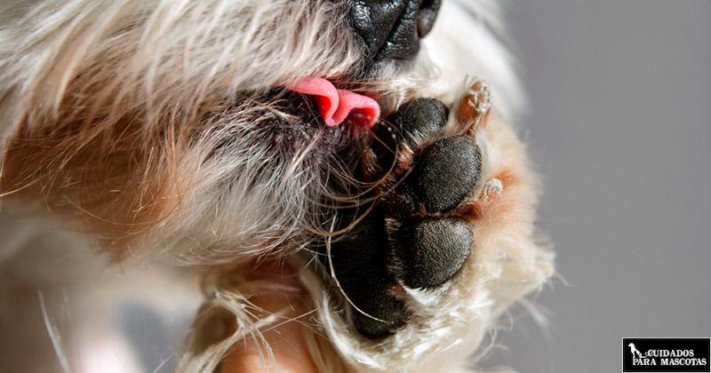 Aprende a cuidar y proteger las almohadillas de tu perro