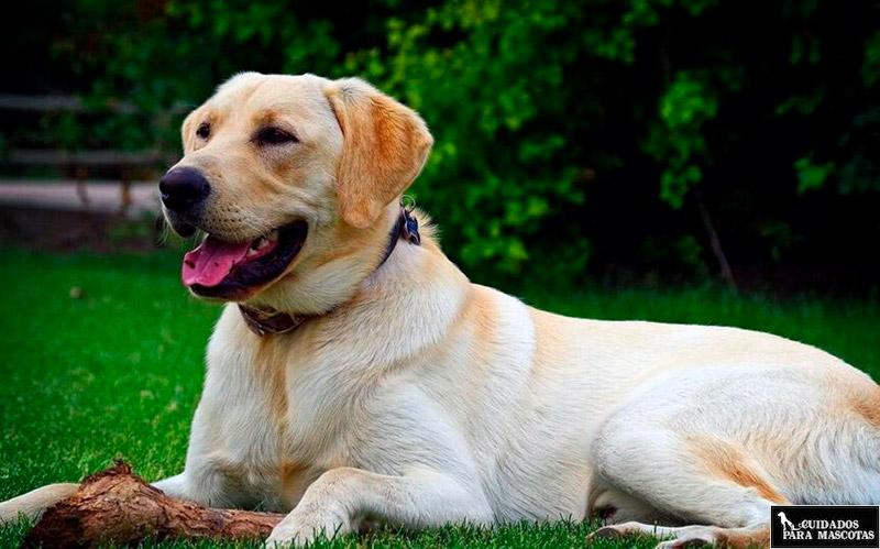 Biotina para perros