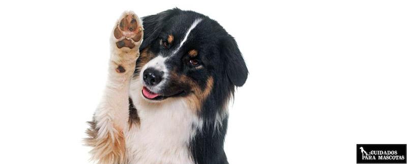 Cuidar y proteger las almohadillas de tu perro