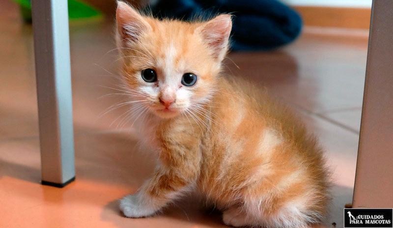 7 Cuidados para un gato pequeño