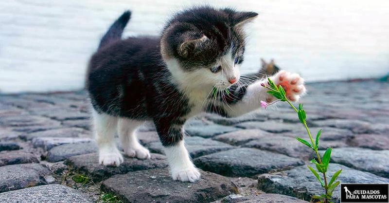 Cuidado con las plantas y los gatitos
