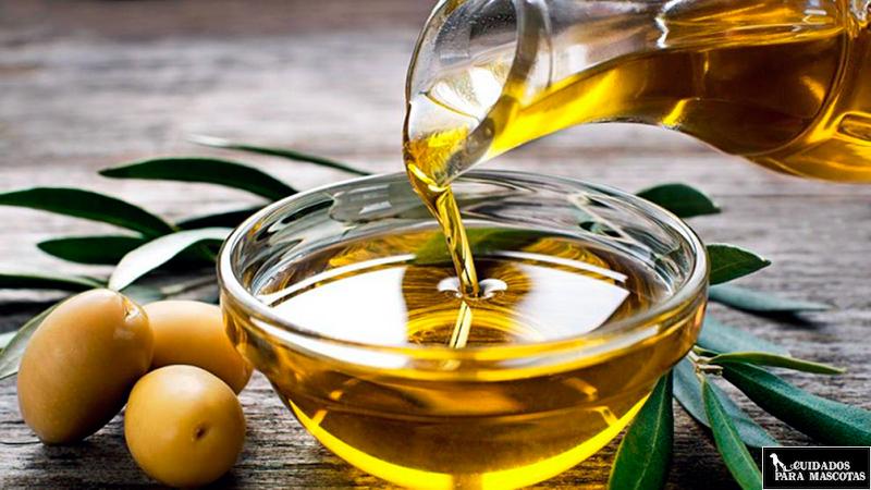 Aceite de oliva para el estreñimiento del perro