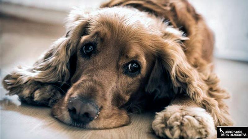 Perro estreñido y triste