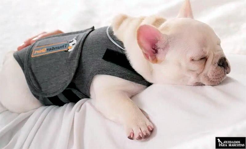 El mejor chaleco anti ansiedad para tu perro