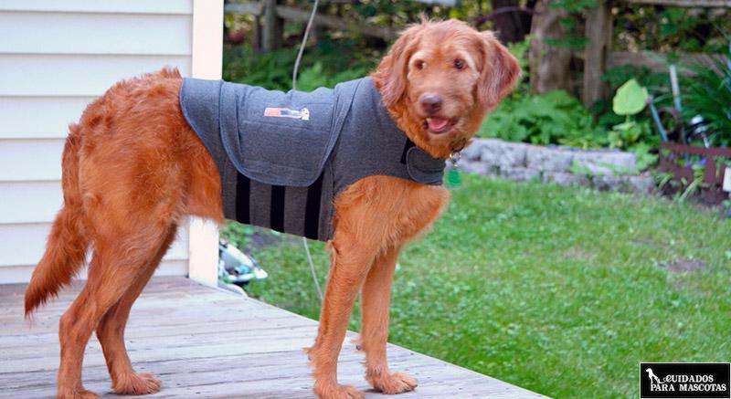 Chaleco anti ansiedad para perros grandes