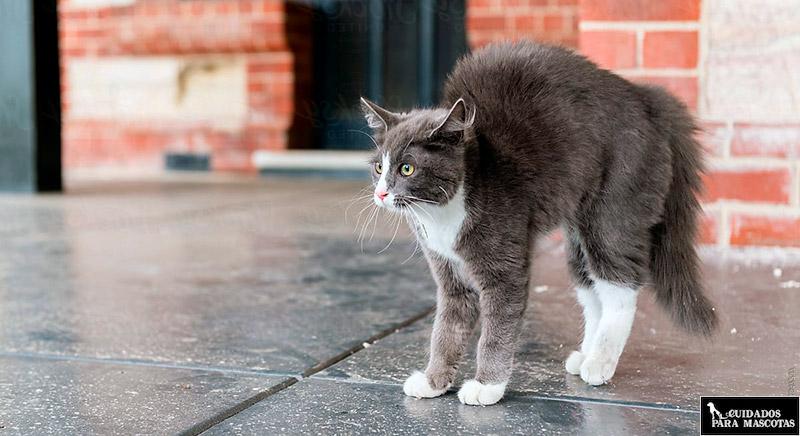 Gato impide que otro le huela el culo