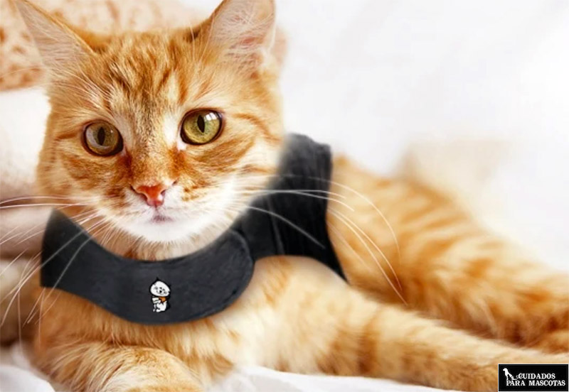 Thundershirt para gatos