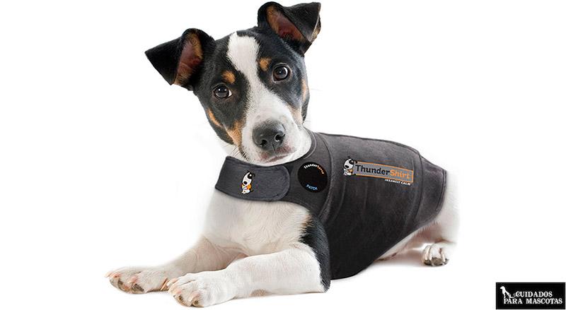 Thundershirt Perro