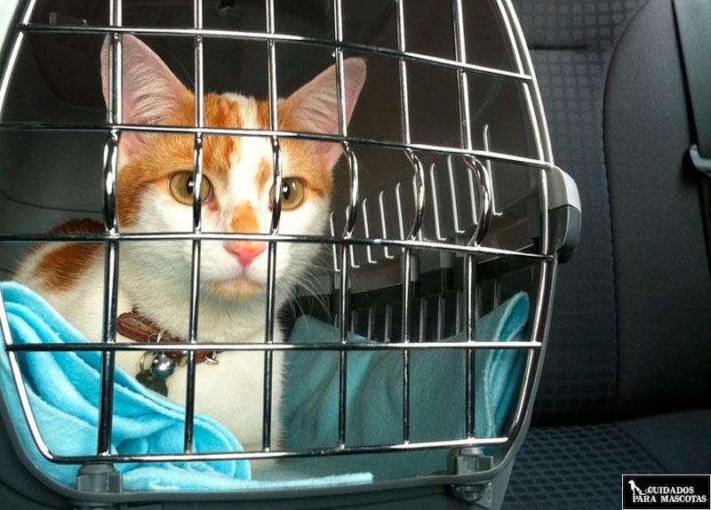 Viajar con el gato en el coche