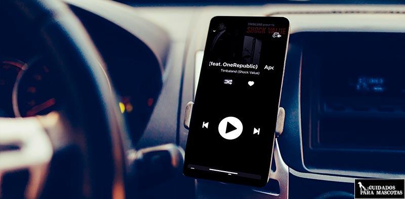 Música suave para tu gato en el coche