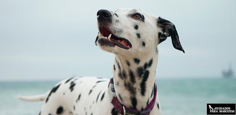Perro con piel clara