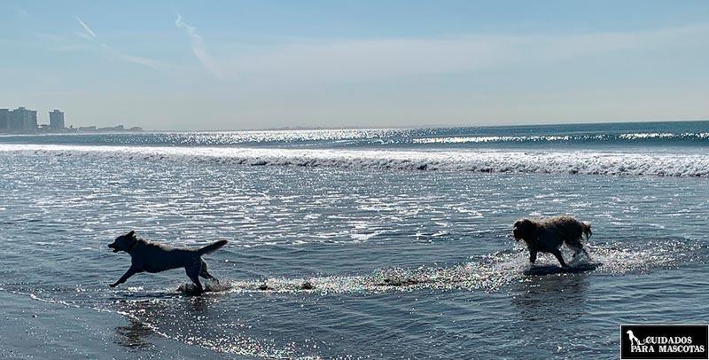Cuidado con la profundidad de la playa al bañarte con tu perro